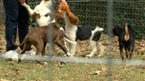 Holiday season puts strain on animal shelters