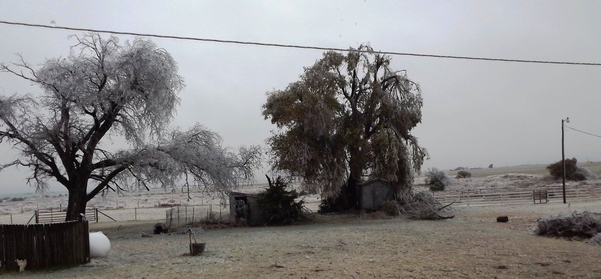 Old Elm trees -- Kingfisher County, well over 24 hours without power !   From Paula Smiley