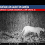 Mountain Lion spotted in Siouxland.