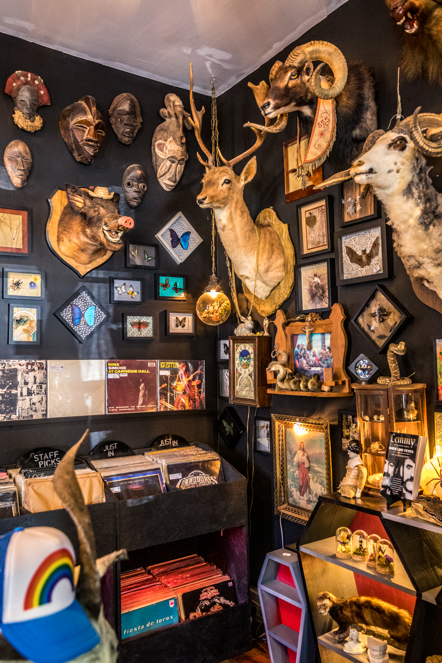 Hail Dark Aesthetics is a one-stop shop for vinyl records and a wide assortment of oddities. From skulls and bones to vintage media and gothic prints, there are a lot of peculiar items to peruse. The Mainstrasse Village spot opened fittingly on Halloween of 2016, with a second location in Nashville, TN. ADDRESS: 720 Main Street (41011) / Image: Catherine Viox // Published: 7.14.20