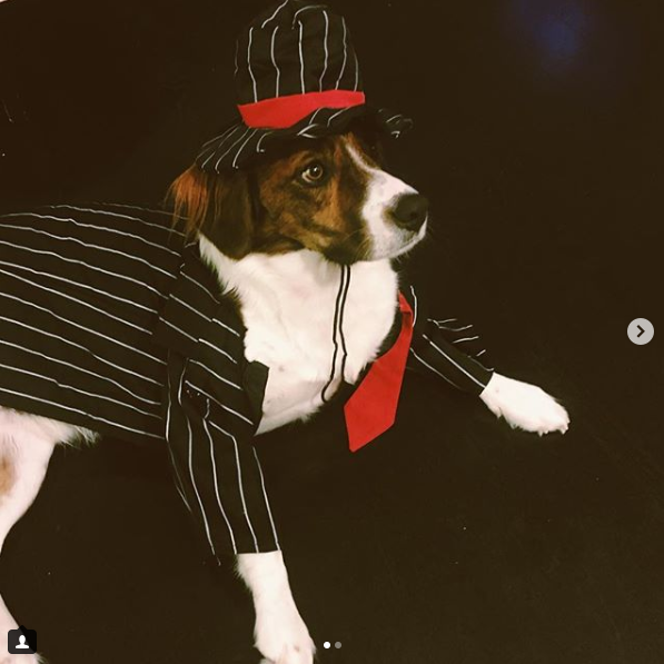 The name is Hobster... Mobster Hobster!{ }(Image: via IG user @hobbes.the.tripod)