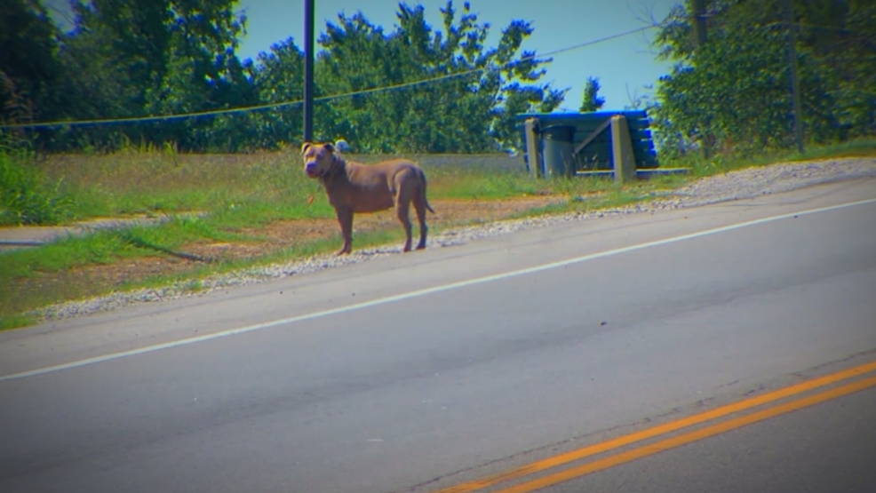 Stray Dogs A Major Problem In Some Tulsa Neigborhoods See A Map - Stray animals in the us map