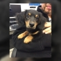 Puppy left to die in Utica dumpster rescued by nearby neighbor