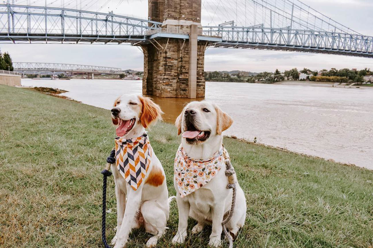 Magnolia is an English setter and Luella is an English Labrador. These stylish BFFs love sightseeing in Cincinnati almost as much as they love coordinating their accessories. / Image courtesy of Instagram user @lu_and_mags // Published: 11.28.18
