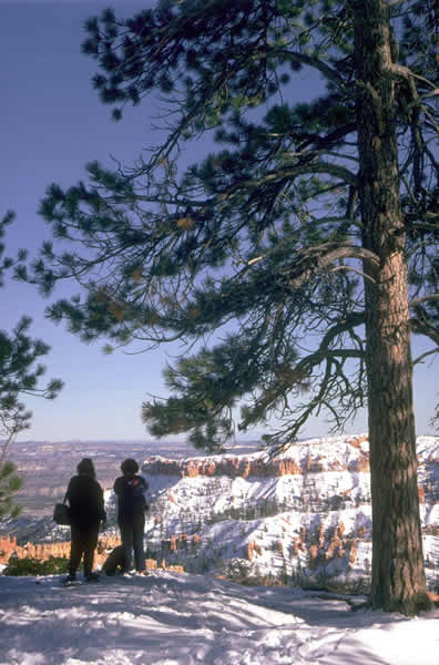 Bryce Canyon Winter View.jpg