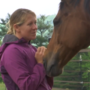 Horse rescue in need of financial help