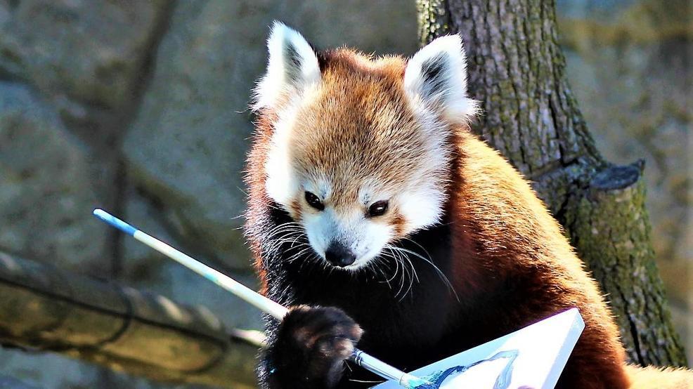 syracuse zoo exhibits animal art to be auctioned november 16 wstm