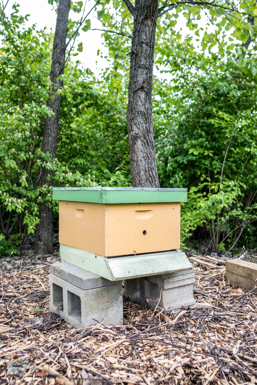 """Fifteen years ago, when we put our first hive in my parents' back field, we couldn't have imagined the journey these girls would take us on. Through keeping bees, we have felt a stronger connection to the natural world and have made wonderful friendships with the people who have hosted our hives. Bee Haven has just been an extension of our adventure with the bees."" -Samantha Gordon, owner / Image: Catherine Viox // Published: 5.24.20"
