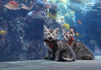 Kittens explore Georgia Aquarium.PNG