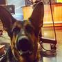 Pet of the Week: Atlas