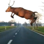 VIRAL VIDEO: Deer jumps over moving car at full speed