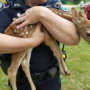 Dixfield police, game wardens rescue abandoned fawn