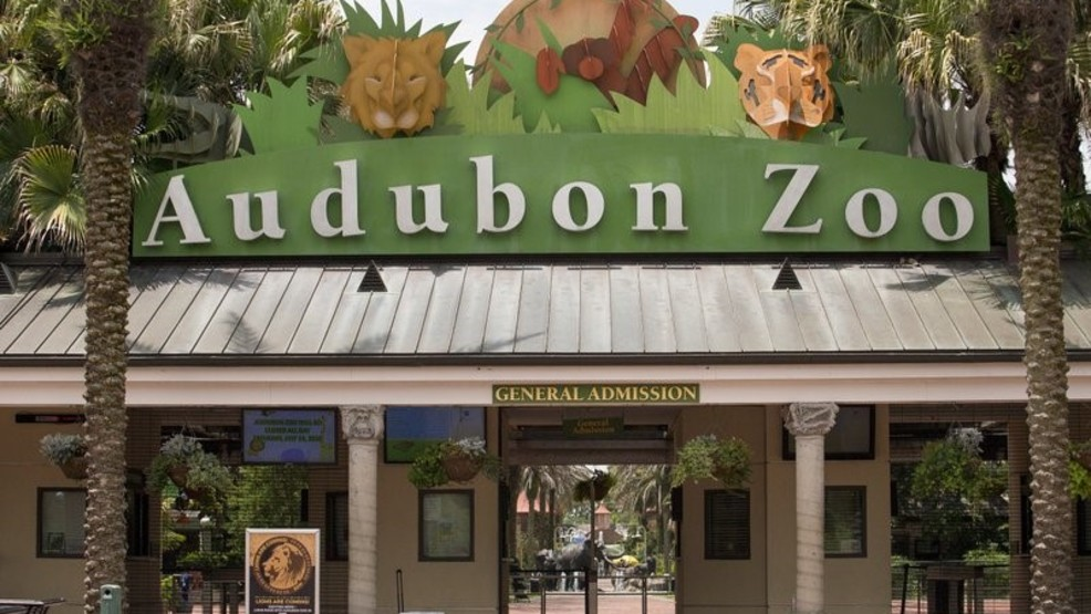 Eighth Animal Dies After Jaguar Escapes New Orleans Zoo Habitat
